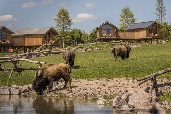 """Au cœur de la vaste zone de 8 ha, consacrée aux grands espaces sauvages d'Amérique du Nord, de nouveaux lodges ont vu le jour : les lodges de la rivière de l'ours noirs et l'Hôtel nature d'exception """"La Grange aux coyotes""""."""