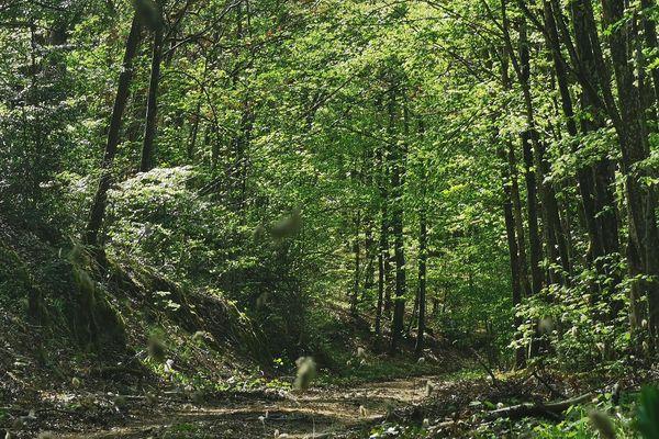 La France compte de nombreuses forêts sur son territoire