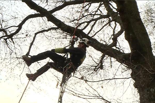 Les arboristes-grimpeurs, toujours accrochés aux branches