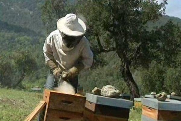 Le jeune apiculteur catalan table sur une récolte annuelle de 3 à 4 tonnes de miel