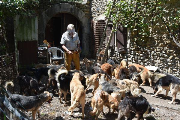 Les chiens ont été découverts en piteux état dans une propriété du Béarn