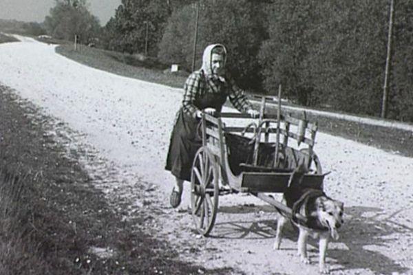Femme à la charette, bords de l'Allier,1945