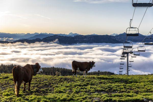 L'alpage de Patrick Veyrat au Semnoz (Haute-Savoie), où il fait paître ses vaches laitières de mai à septembre.