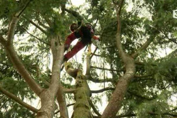 Cédric Billod dans les arbres « la Canopée enchantée »
