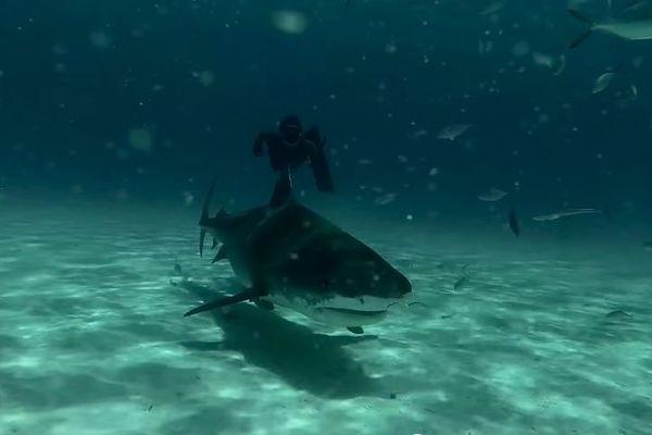 Un océan des requins et l'amour
