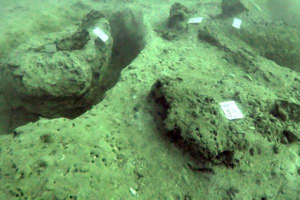 Au large de Palavas et Carnon (Hérault) - les plongeurs sortent des sédiments, une souche d'arbre vieille de 8.000 ans - septembre 2020.