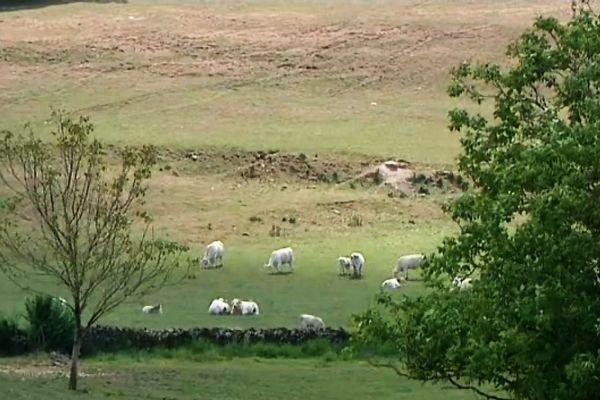 Un champ proche de Châtillon-en-Bazois (archives 2011)