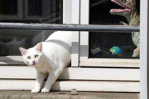 Attention si vous aérez en période de forte chaleur : les portes et fenêtres ouvertes permettent aux voleurs de s'introduire discrètement dans votre appartement!
