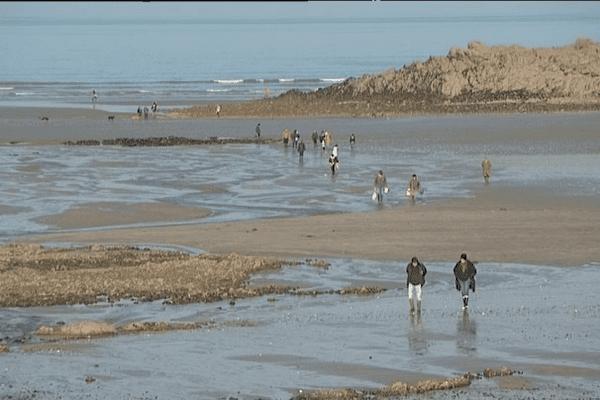 Les grandes marées font la joie des pêcheurs de coquillages