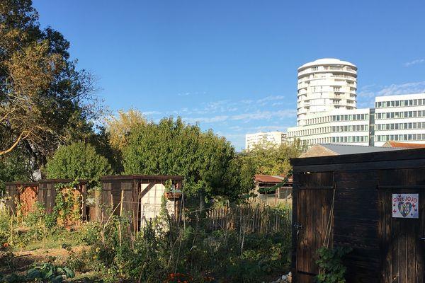 Les jardins collectifs de la Gloriette permettent, en pleine ville, de développer une alimentation saine, locale et accessible à tous.