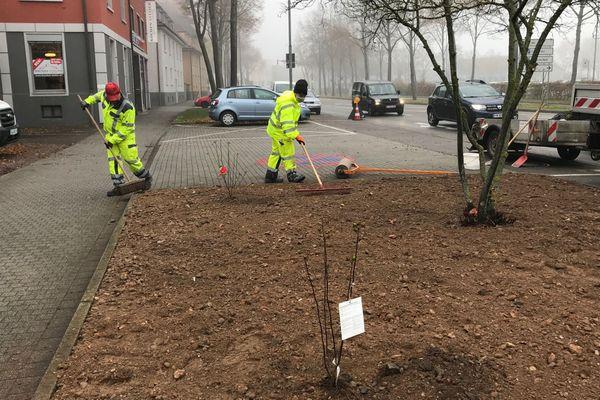Les jardiniers de Kehl ont commencé la végétalisation des sols en 2017