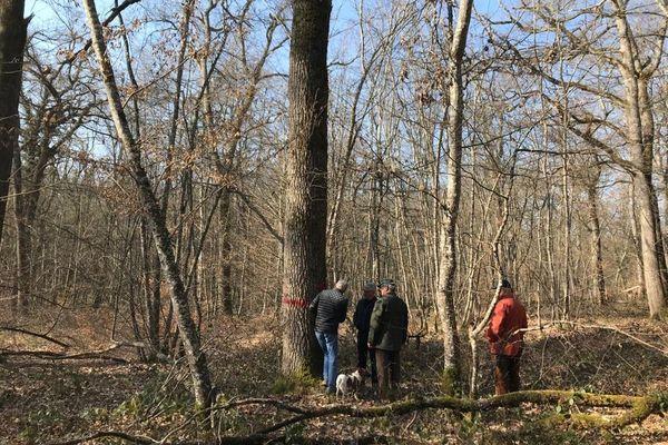 Les forêts privées de l'Allier vont fournir une trentaine de chênes pour la charpente de Notre-Dame de Paris.