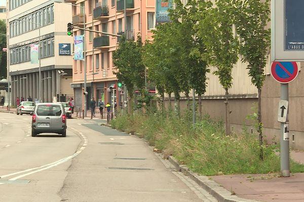Avenue de Bretagne, une partie des trottoirs dédiée à la végétation en pieds d'arbres