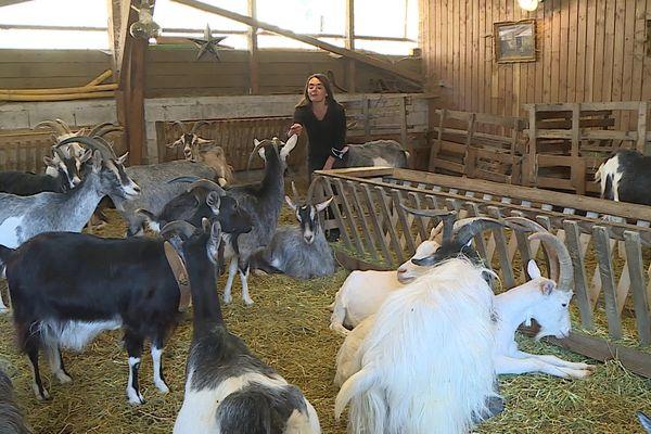 Valérie Corrège et son troupeau de chèvres du massif Central, espèce rustique traditionnelle, devenue rare en Cévennes. 14/04/2021