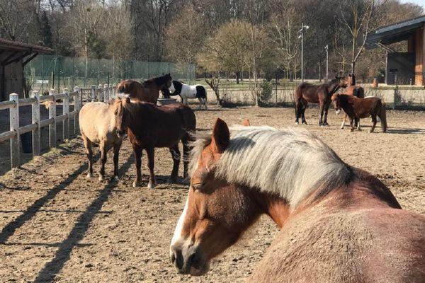 Les chevaux peuvent mourir de la rhinopneumonie équine, non-transmissible à l'être humain.