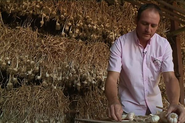 Comme tous les producteurs, Gaël Bardou (photo) travaille son ail rose à la main.