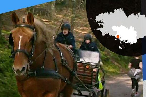 Viva, jument de trait bretonne et son équipage participent à la collecte de déchets.