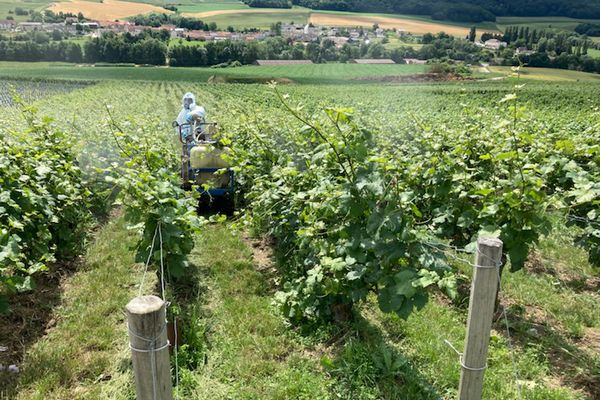 La guerre contre le Mildiou a commencé dans le vignoble de Champagne.