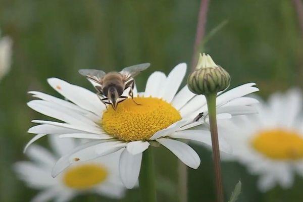 Les abeilles sont sensibles à la pollution au plomb.