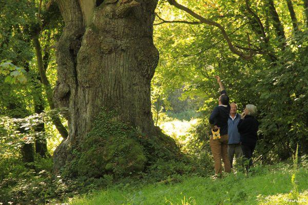Mickaël Jézégou au pied d'un arbre vétéran :toujours la même émotion et un lien étroit avec ce patrimoine naturel !