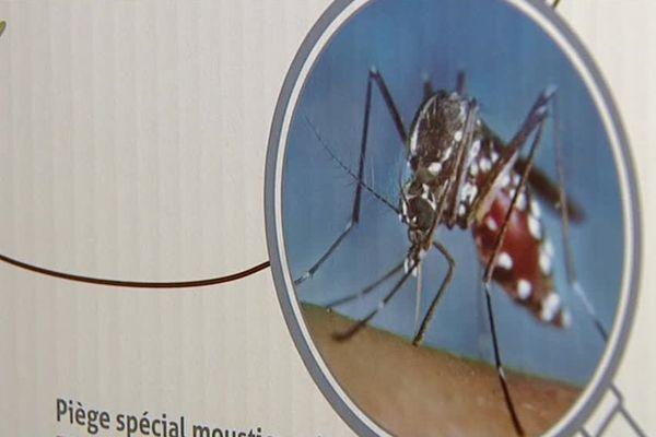 moustique tigre : le piège existe