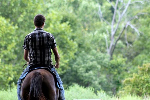 Avec l'équitation western, on apprend à manipuler du bétail comme les cowboys aux Etats-Unis.