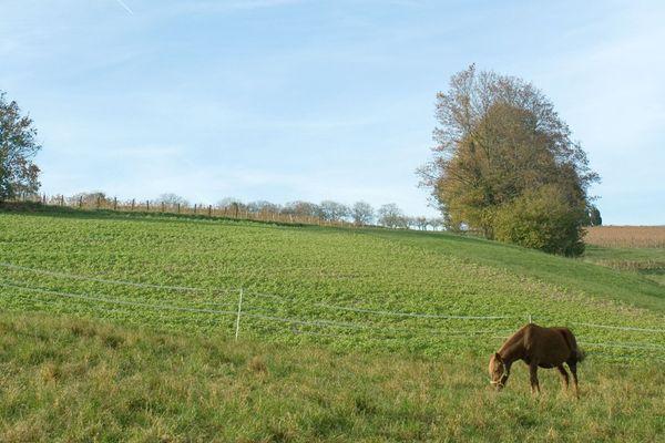 Plusieurs chevaux ont été mutilés et tués en France depuis février, entraînant de l'inquiétude chez les propriétaires d'équidés. (Images d'illustration)