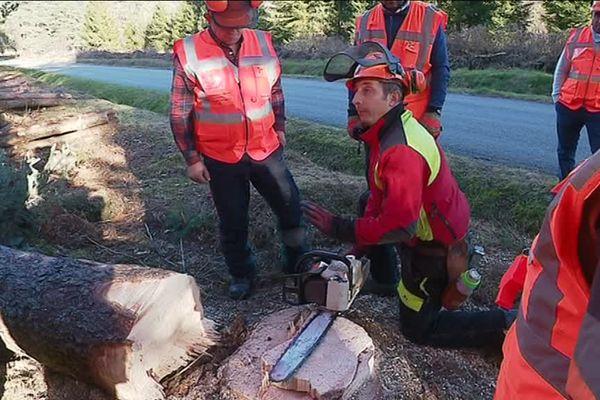Chaque année, en France, 300 accidents graves sont liés à l'utilisation d'une tronçonneuse.