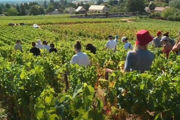 Les dépistages auront lieu dans différentes communes viticoles de la région.
