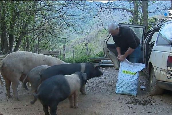 Ils sont bergers, éleveurs de cochons et restaurateurs en tenant une ferme-auberge.
