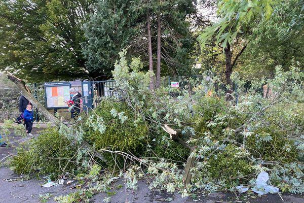 Un arbre est tombé à l'école de la Poterie de Rennes