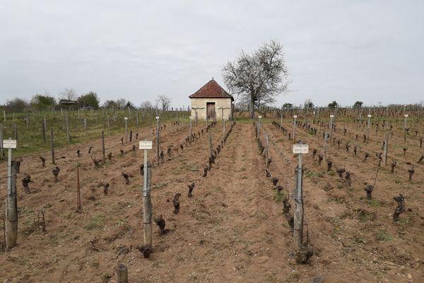 Les vignes conservatoires de la Société pomologique du Berry