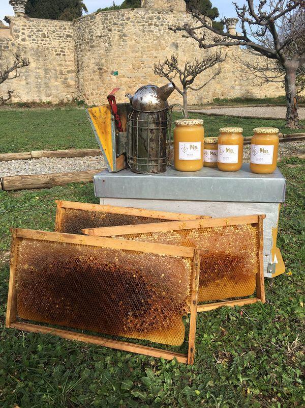 Miel et cadres de ruchers de l'apicultrice Anne Vialle en petite Camargue