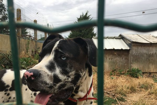 Un chien attend d'être adopter