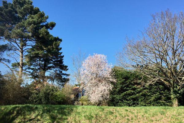 Premières floraisons de printemps !