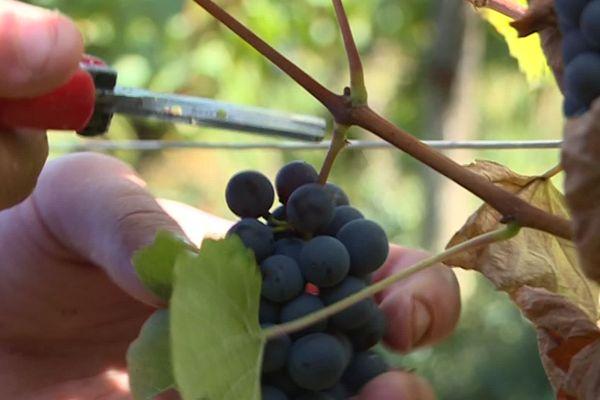 Les Vins de Bourgogne poursuivent leur avancée alors que la tendance à la consommation est en baisse en France