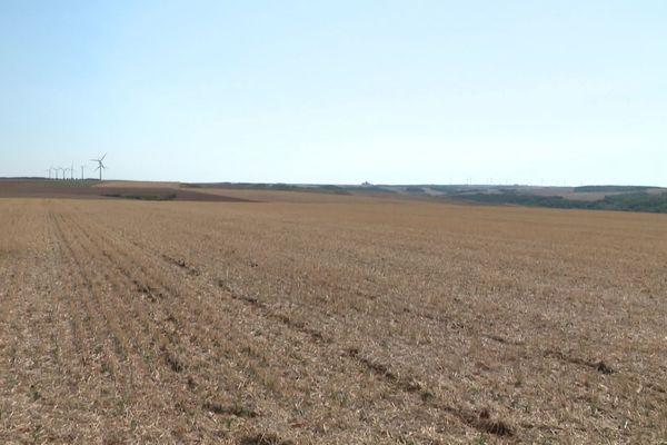 Des terres sèches, dans l'attente de pluies qui permettraient d'améliorer les semis