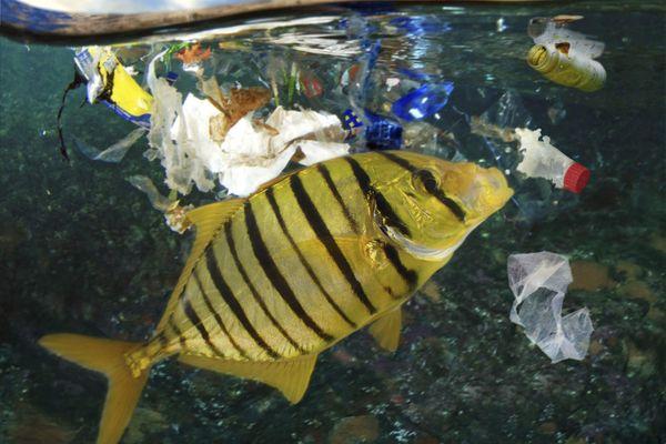 La surconsommation de plastique menace l'écosystème maritime