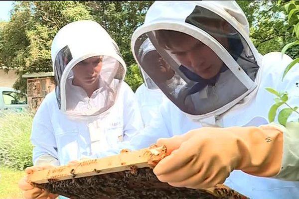 150 jeunes de 28 pays différents se retrouvent pour échanger autour de l'apiculture au lycée agricole de Nérac.