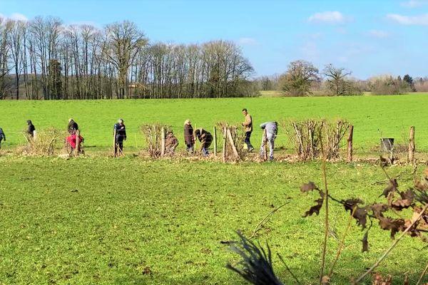 Des paysans et des militants associatifs se sont rassemblés pour planter une haie bocagère.