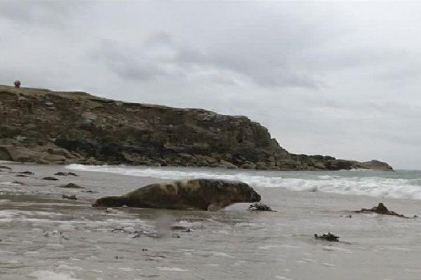 Un jeune phoque de quatre mois regagne l'océan