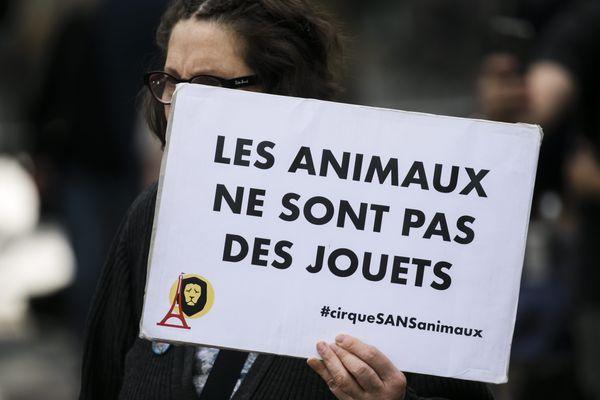 Les défenseurs de la cause animale se réunissent de plus en plus souvent en France lors de manifestation, notamment contre les cirques avec animaux.
