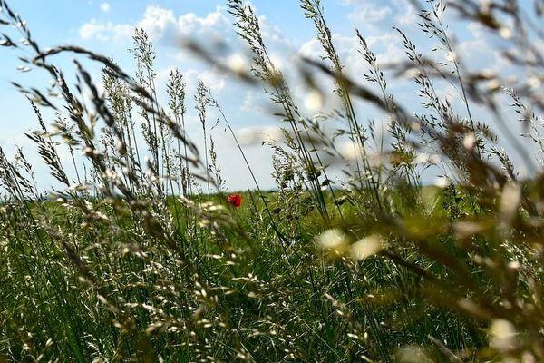 La dissémination des pollens est favorisée par la météo ensoleillée et ventée