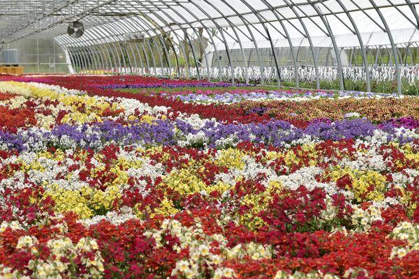 vente de fleurs interdites, les horticulteurs en difficulté