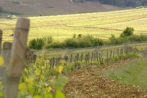 Les Climats du vignoble de Bourgogne sont candidats à l'inscription sur la liste du patrimoine mondial de l'Unesco.