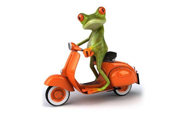 Grenouille en scooter