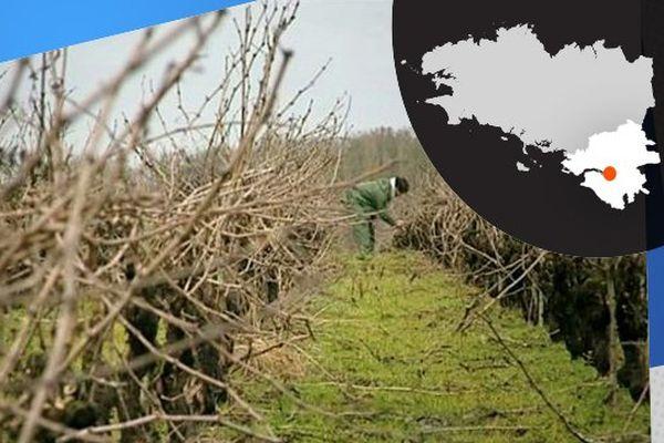 Les vignes de Monnières, où l'on prépare le muscadet