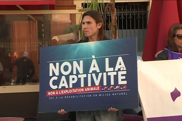 Les animalistes s'étaient donnés rendez-vous dans les rues de Nice, ce samedi 9 novembre, pour protester contre l'existence des delphinariums.