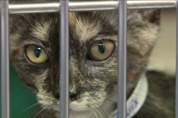 Ces chatons recueillis souffrent souvent du coryza, une forme de grippe très contaminante pour les félins.