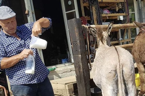 Olivier Fondacci, éleveur, avec ses ânes.